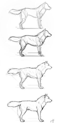 Guides to Drawing Wolves - Basic Wolf Step by Step by whisperpntr.devia… on - Guides to Drawing Wolves – Basic Wolf Step by Step by whisperpntr.devia… on - Animal Sketches, Animal Drawings, Drawing Sketches, Drawing Animals, Drawing Ideas, Drawings Of Wolves, Drawing Guide, Drawing Drawing, Cool Wolf Drawings