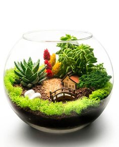 Terry Farm Terrarium