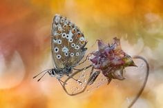 Butterfly - Mariposa by Carlos  Barriuso on 500px