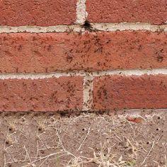 Destroy Exterior Ant Nests