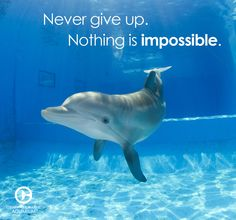 Never give up. Nothing is impossible.