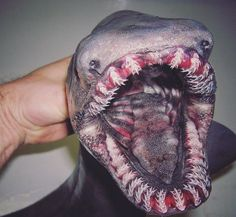 A deep-sea fisherman in Russia catches some strange looking creatures and delights his Twitter followers by posting pictures of them
