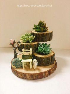 Succulents Succulents - - Gardeners - Garden Care, Garden Design and Gardening Supplies Garden Crafts, Garden Projects, Diy Crafts, Suculentas Interior, Decoration Plante, Garden Care, Winter Garden, Planting Succulents, Indoor Succulents