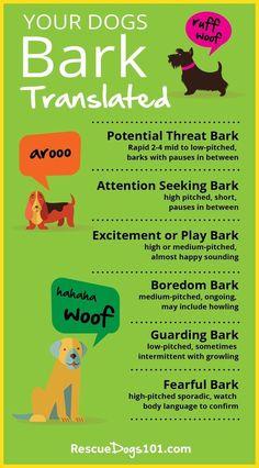 dog training,dog hacks,teach your dog,dog learning,dog tips Husky, Labrador Retriever, Dog Body Language, Dog Information, Easiest Dogs To Train, Dog Facts, Dog Care Tips, Pet Care, Types Of Dogs