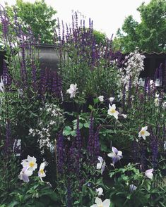 'Caradonna' sage, and Anemone 'Wild Swan' Stacked black pots make a beautiful wall. Outdoor Gardens, Beautiful Gardens, Perfect Plants, Perennial Garden, Prairie Garden, Cottage Garden, Plants, Moon Garden, Garden Inspiration