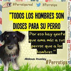Y no deberíamos estar orgullosos de eso #perrotips