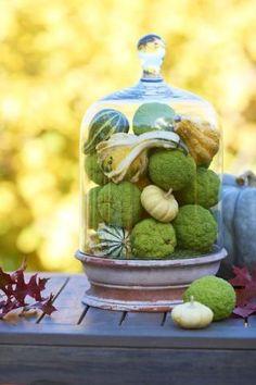 8 hedge apple displays
