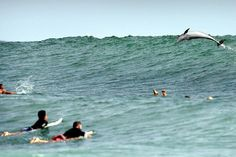 This is surfing.