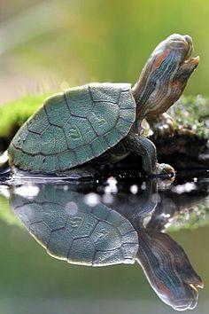 I love turtles.