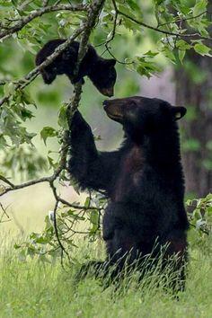 Jasmine black bear white plains speed dating teens sex pics