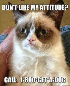 Grumpy cat, grumpy cat meme, grumpy cat humor, grumpy cat quotes, grumpy cat funny …For the best humour and hilarious jokes visit cat Grumpy Cat Quotes, Grumpy Cat Humor, Cats Humor, Memes Humor, Cat Memes, Funny Memes, Hilarious Jokes, Funny Quotes, It's Funny