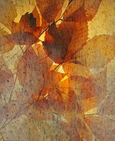 Autumn Rain by Jon Blumenaus.  Photography, Photoshop     http://fineartamerica.com/featured/autumn-rain-jon-blumenaus.html