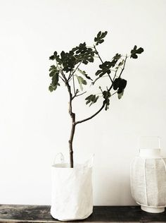 new spring goal- bring nature inside our home
