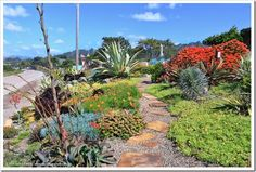 Succulents and More: Succulents by the sea: Cambria Shores Inn in California. Coastal Gardens, Beach Gardens, Garden Paths, Garden Landscaping, California Garden, Water Wise, Chelsea Flower Show, Exotic Plants, Drought Tolerant