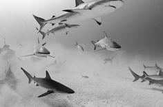 MMM Exclusive Interview: Shark Photographer Todd Bretl - My Modern Metropolis
