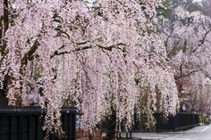 These Weeping Trees Will Have You Jumping for Joy