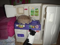 Bunnies explore a kitchen that's a little more bunny-sized - May 15, 2014 - More at today's link: http://dailybunny.org/2014/05/15/bunnies-explore-a-kitchen-thats-a-little-more-bunny-sized/ !