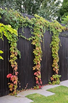 6 Green Fence Designs, Plants To Beautify Your Garden Garden Decor For homeowners, a plant fence is a great way to provide privacy and keep out unwanted critters such as squirrels and other rodents. And for pet owners. Garden Trellis, Garden Fencing, Garden Landscaping, Green Fence, Black Fence, Black Garden Fence, Vine Fence, Diy Jardin, Meteor Garden