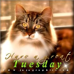 From my awesome sister, Vicky! Happy Tuesday Quotes, Happy Monday, Days Of Week, Months In A Year, Tuesday Greetings, Tuesday Images, Bon Mardi, Encouraging Thoughts, Morning Pictures