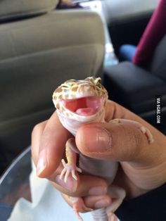 Ridiculously photogenic Leopard Gecko
