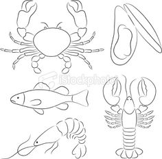 Sketch Drawing Seafood - Seafood Sketch Collection Crab Lobster Shrimp Fish Mussel 1000 Fish On Plate Drawing Stock Images Photos Vectors Fish Sea Bass Sketch Drawing Stock Il. Bird Line Drawing, Plate Drawing, Basic Drawing, Squid Drawing, Koi Fish Drawing, Crab Painting, Pebble Painting, Aquarium Drawing, Lobster Drawing