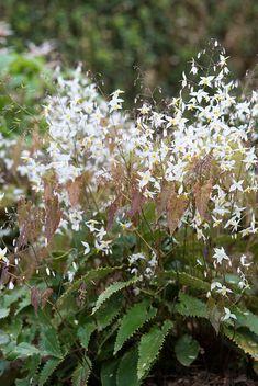 Garden Plants, Perennials, Yin Yang, Garden Ideas, Exotic, Garten, Perennial, Backyard Ideas