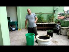 Como cultivar árvores frutíferas em vasos. Mais