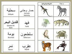 Arabic animal vocabulary 16