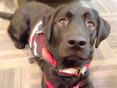 Service Dog Laws For Dummies