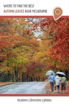 Where to Find the Best Autumn Leaves near Melbourne