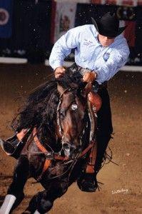 Chromed out mercedees AQHA stallion