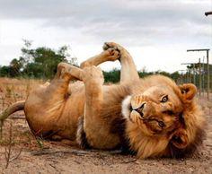 Animal Yoga Masters 28 Pics