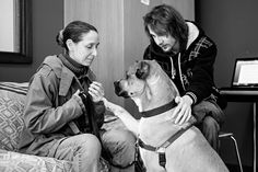 The human-canine bond: http://cppdacademy.co.uk