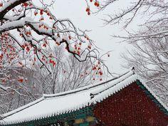 Snow Berries #winter