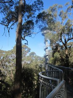 An easy day trip from Sydney, the Illawarra Fly lets you walk amongst the treetops, with the Knight's Tower viewing platform rising 45 metres above the ground