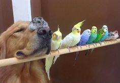 Se belas fotos de animais já atraem a atenção no Instagram, imagina uma amizade tão grande e inusitada como essas?