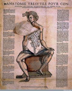 Anatomie tresvtile povr congnoistre les parties interievres de la femme, et la sitvation, figvre, nombre et position dicelle.
