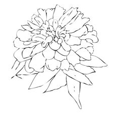 zinnia means daily remembrance and thoughts of an absent friend