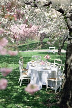 Host your Easter brunch under a blossoming tree.