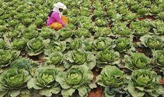 Mujer, Agricultura y alimentos
