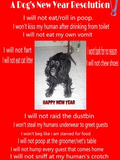 """Ever wondered if a """"dog"""" would have a list of new year resolutions what would it be?, read on http://princelypaws.com/index.php/2017/01/04/a-dogs-new-year-resolution/"""
