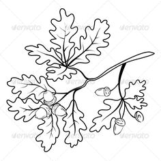 Oak branch with Acorns Outline - Flowers & Plants Nature
