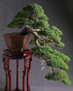 Fun And Eco-Helpful Solutions To Remodel Your Yard Art Bonsai Tree Bonsai Tree Types, Bonsai Plants, Bonsai Garden, Ikebana, Plantas Bonsai, Juniper Bonsai, Bonsai Styles, Miniature Plants, Growing Tree