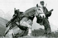 Pony, War Horses, Animals, Google, Soldiers, Historia, Horse, Army, History