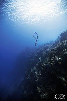 Freediving. Photo taken on one breath by Christina Saenz de Santamaria. #freediving #underwater #1ocean1breath #ocean #oneoceanonebreath