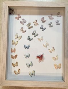 Coquina Shell framed Butterfly art piece. Hand crafted