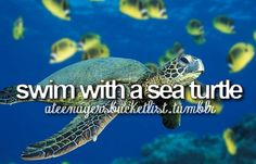 Swim with a Sea Turtle - CHECK :) - this one never gets old - hope to do this many more times!