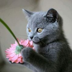 Some times you just have to stop and smell the flowers.  Cat , kitty