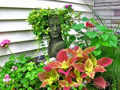 Container Gardening with KatG cubit: Head Planters forum: Share Your Head Container Gardening, Gardening Tips, Head Planters, Window Boxes, South Florida, Amazing Gardens, Potted Plants, Bing Images, Garden Sculpture