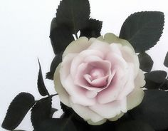Blushing Pink & White Rose